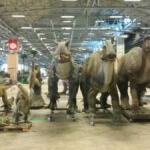 Sécurité Exposition de l'ère des dinosaures à l'ère de glace 2
